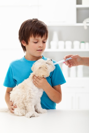 Boy at the veterinary doctor with his little doggy receiving medication Stock Photo - 16061358