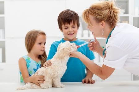 veterinario: Los niños con sus mascotas en el médico veterinario - perro mullido recibiendo medicación