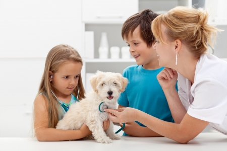 vets: Kids at the veterinary doctor with their pet - checking the dog with a stethoscope Stock Photo
