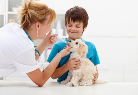 Boy at the veterinary doctor with his dog photo