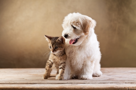 dog and cat: Best friends - kitten and small fluffy dog looking sideways - copy space