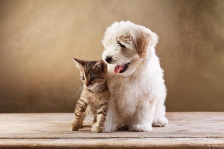 mejores amigas: Mejores amigos - gatito y perro mullido peque�o mirando hacia los lados - copia espacio