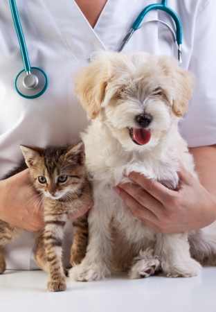 checkup: Little dog and cat at the veterinary checkup