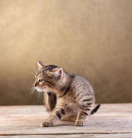 Small kitten sitting on old wooden floor scratching Foto de archivo