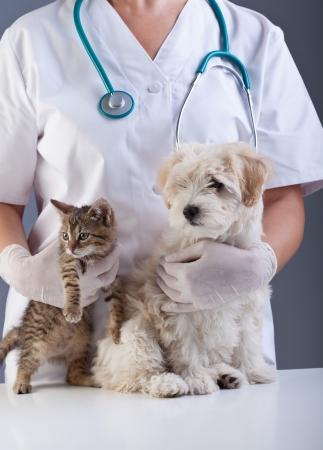 수의사 애완 동물 근접 촬영 - 고양이와 작은 개 스톡 콘텐츠