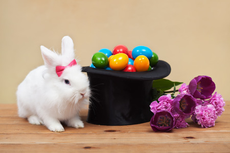 bunny rabbit: Easter magic with bunny guarding colorful eggs in magician hat and spring flowers