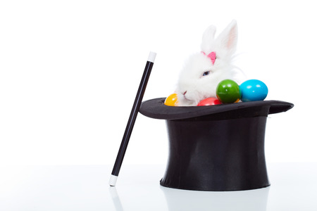 bunny rabbit: Cute white rabbit with colorful easter eggs peeking out of a magician hat - isolated
