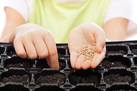 germinaci�n: Ni�o siembra de semillas en la bandeja de germinaci�n - portarretrato en las manos