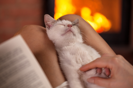 Little kitten enjoying massage, lying in owner lap - sitting together by the fire and relaxing, shallow dept Фото со стока