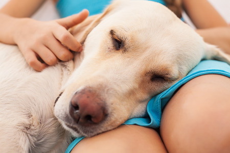 Dog enjoys the company of her human friend - closeup on little girl hands and her pet Zdjęcie Seryjne