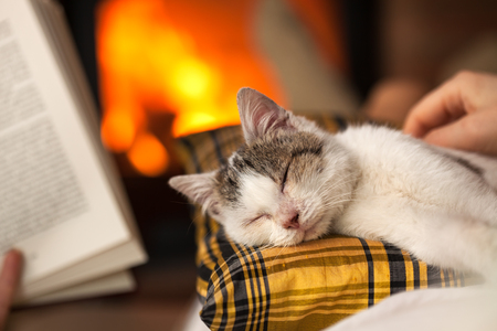 Relaxing by the fire together with a kitten and a good book - closeup, focus on the cat, shallow depth Zdjęcie Seryjne