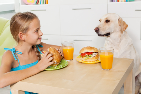 Little girl treating her furry friend with a snack - having a hamburger together with her labrador dog Zdjęcie Seryjne
