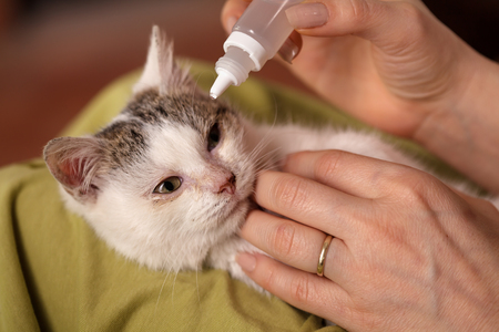Treating the eyes of a little rescue kitten with an infection - comforting after cleaning, closeup