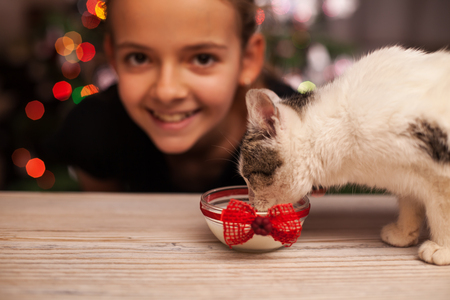 Happy girl with her rescued kitten at christmas time - watching her furry friend drinking milk, shallow depth Zdjęcie Seryjne
