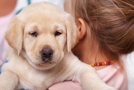 Little girl holding her cute labrador puppy dog - closeup, shalow depth of field