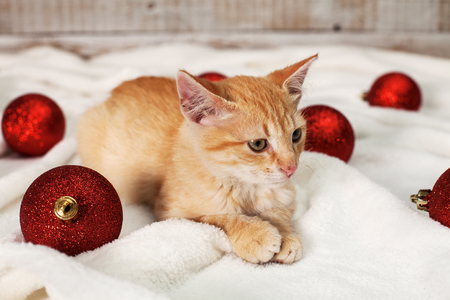 Ginger kitten lying among christmas ball decorations looking focused Zdjęcie Seryjne