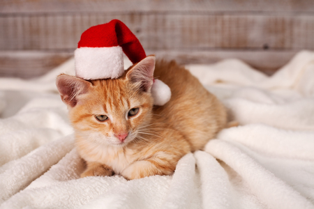 Cute ginger cat getting in the christmas mood - wearing a santa hat lying on white blanket Stock Photo