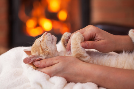 Cute kitten enhoy petting from owner in holidays season - lying in woman hands in front of fireplace