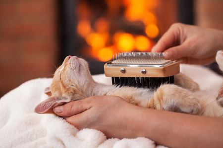 Kitten in deep relaxation enjoy being brushed by owner - lying in woman hand in front of fireplace