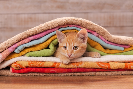 Orange kitten nested under many colorful towels - looking curious Zdjęcie Seryjne