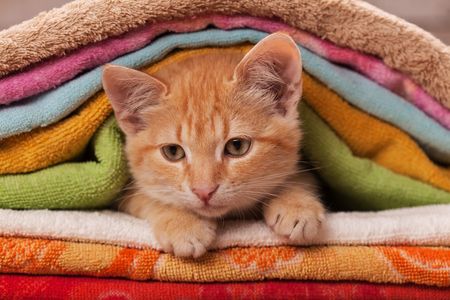 Cute orange kitten playing and slipping through a pile of colorful towels - close up Zdjęcie Seryjne