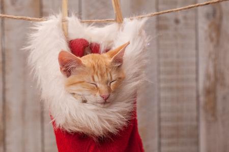 Cute orange kitten sleeping in warm santa hat, hanging on rope - close up