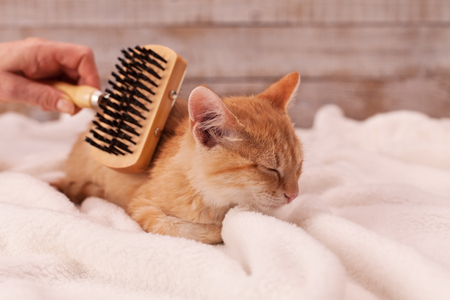 Kitten enjoy brushing lying on a soft blanket and let the owner use a special brush - close up