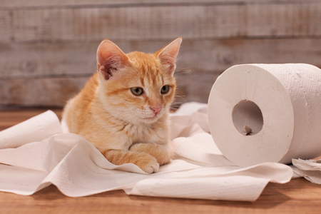 Cute orange kitten playing with a toilet paper roll - lying on the remains , close up, old wooden planks background Zdjęcie Seryjne