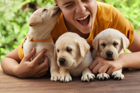 Teenager boy holding his cute labrador puppies, having fun  and enjoy their company - close up Stock Photo - 119145962