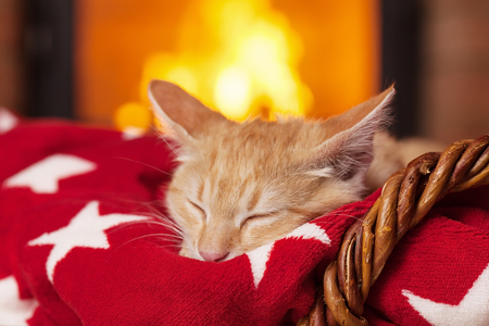 Orange kitten sleeping on red blanket in front of fireplace in security and comfort of a quiet evening at home