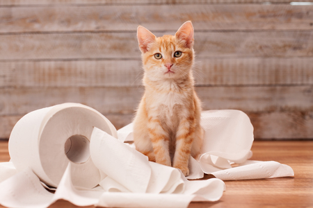 Cute orange tabby kitten sitting on the remains of toilet paper roll it used to play with Zdjęcie Seryjne