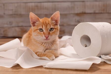 Cute ginger kitten resting on some unrolled toilet paper - close up Foto de archivo