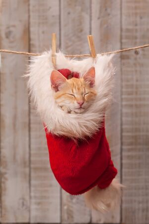 Cute ginger kitten sleeping in santa hat, part of the christmas decoration - waiting for the holidays