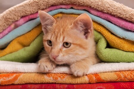 Cute ginger tabby kitten looking from beneath a colorful towel heap - close up