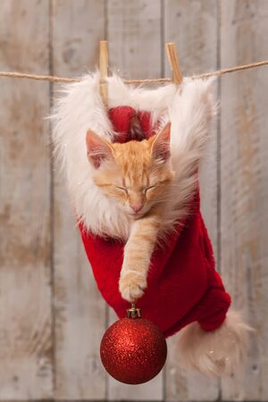 Young tabby kitten with ginger stripes sleeping in a santa hat hanging on rope - christmas bauble decoration on its paw Stock Photo