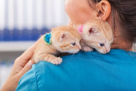 Two cute ginger kittens on the veterinary professional shoulder - hanging on with their claws Foto de archivo