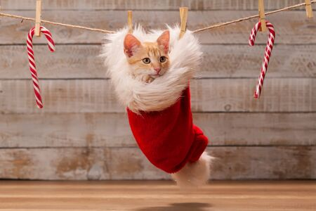 Fluffy christmas present - cute tabby kitten resting in a santa hat hanging from a rope with other xmas candy decorations Foto de archivo