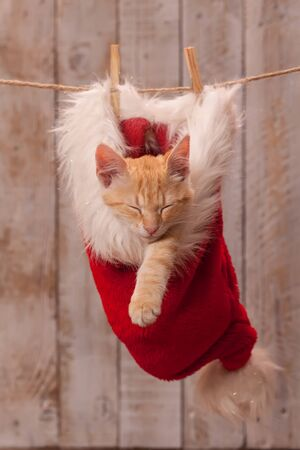 Young ginger kitten resting in a santa hat hanging on a rope - wooden plank background
