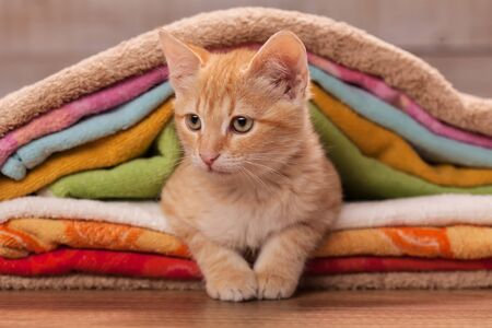 Cute kitten resting tucked between colorful towels - close up Foto de archivo