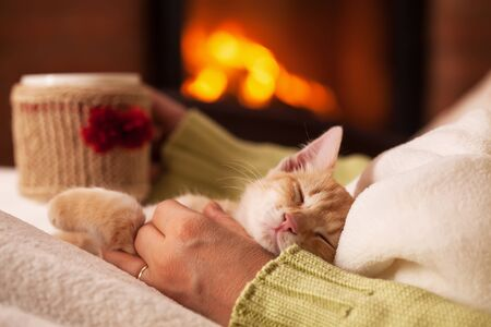 Cute ginger kitten in total relaxation, resting in the lap of his owner - a woman sitting in front of fireplace with a warm cup of drink. Enjoying life in the holiday season. Foto de archivo
