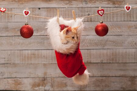 Cute ginger kitten watching the christmas preparations sitting in a santa hat xmas decoration
