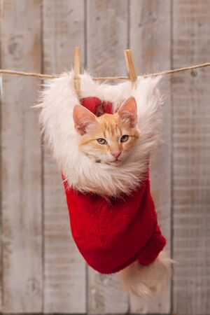 Cute tabby kitten looking in camera sitting in santa hat hangong on rope - getting in the christmas feeling