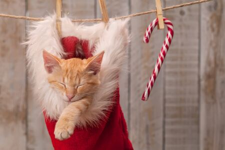 Cute ginger kitten sleeping in santa hat among christmas decorations hanging on a rope - close up Foto de archivo