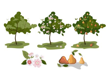 Vector of trees growing to pear on white