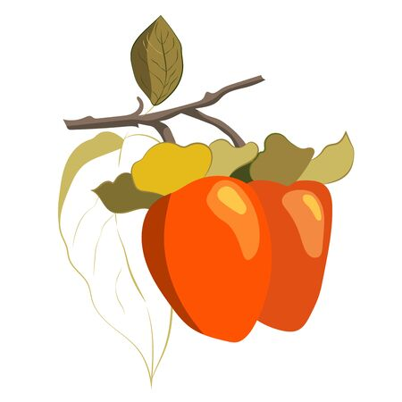 Vector illustration of a persimmon tree branch. Ripe persimmons on a branch with leaves.