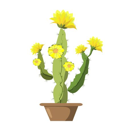 Blooming cactus on a bright background. Modern card design. Vector illustration in cartoon style. Ilustrace