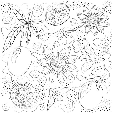Black and white passiflora isolated on white background. Vector illustration. Decorative retro style passiflora product for restaurant menu, market label, coloring book.
