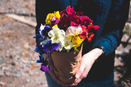 Colorfull bouquet of pansies in a craft paper in a womans hand. Spring`s concept.