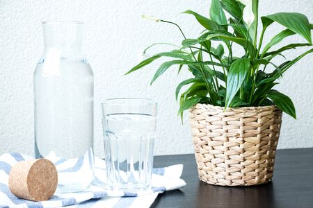 A glass and bottle of water, green plant in a pot on the table with a blurred background. Beautiful fresh background.