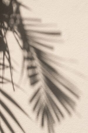 Palm tree, leaves, shadow, wall, beige. Beautiful shadows of palms leaves on a beige wall.